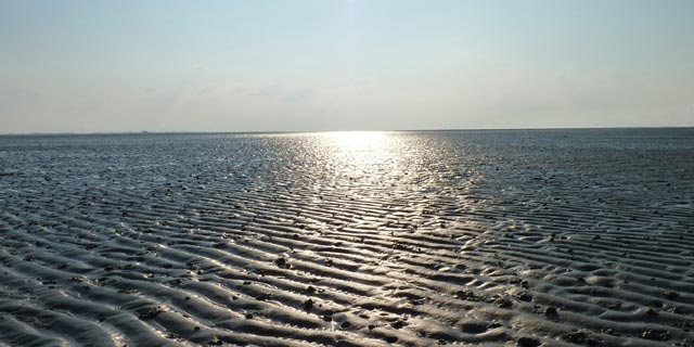 Das Wattenmeer Ostfrieslands